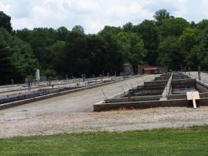 Raceways at the Buford Trout Hatchery